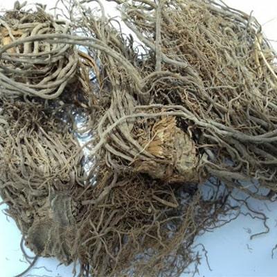 ریشه سنبل الطیب برای خواب